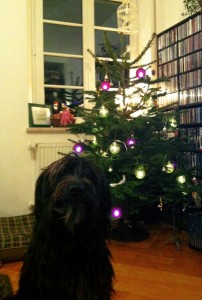 Our office dog, Remus. And our awesome tree!
