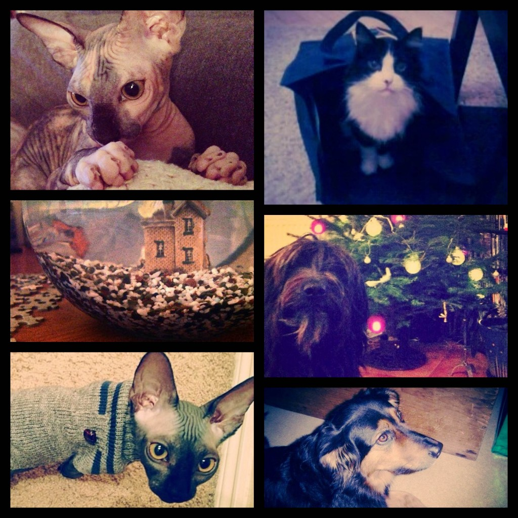 Pets of BookRix! Top left: Abby, Top Right: Misfit, Middle left: Sparkles the fish, Middle Right: Remus, Bottom Left: Gaius, Bottom Right: Raven 